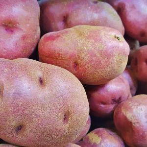 pomme-de-terre-rouge