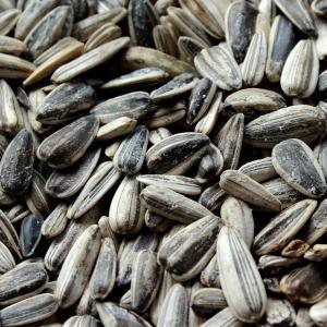 graine-de-tournesol-roties-et-salees